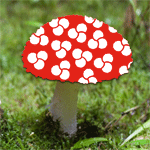 Quel beau champignon ! Dommage qu'il soit vnneux...