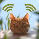 WarKitteh, ou le collier de chat qui repère les réseaux WiFi mal protégés